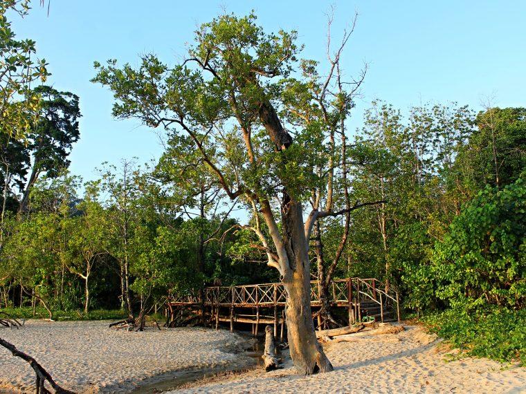 60.Island South Andaman Wander